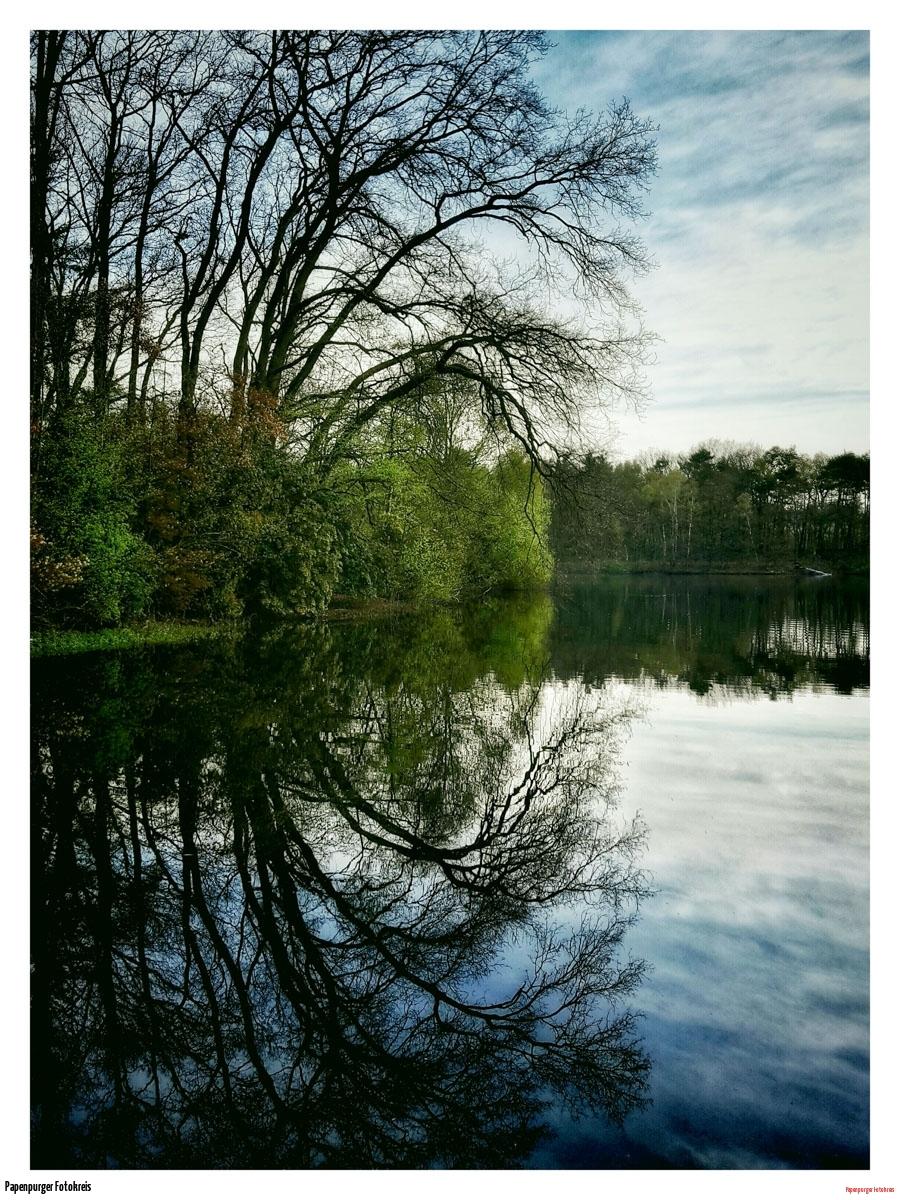 joschu-Bäume am Helenensee I
