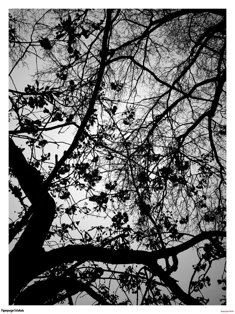 joschu-Der Baum
